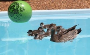 Learning to swim. By Reginald J. Dunkley