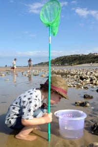 03-Searching-rockpools