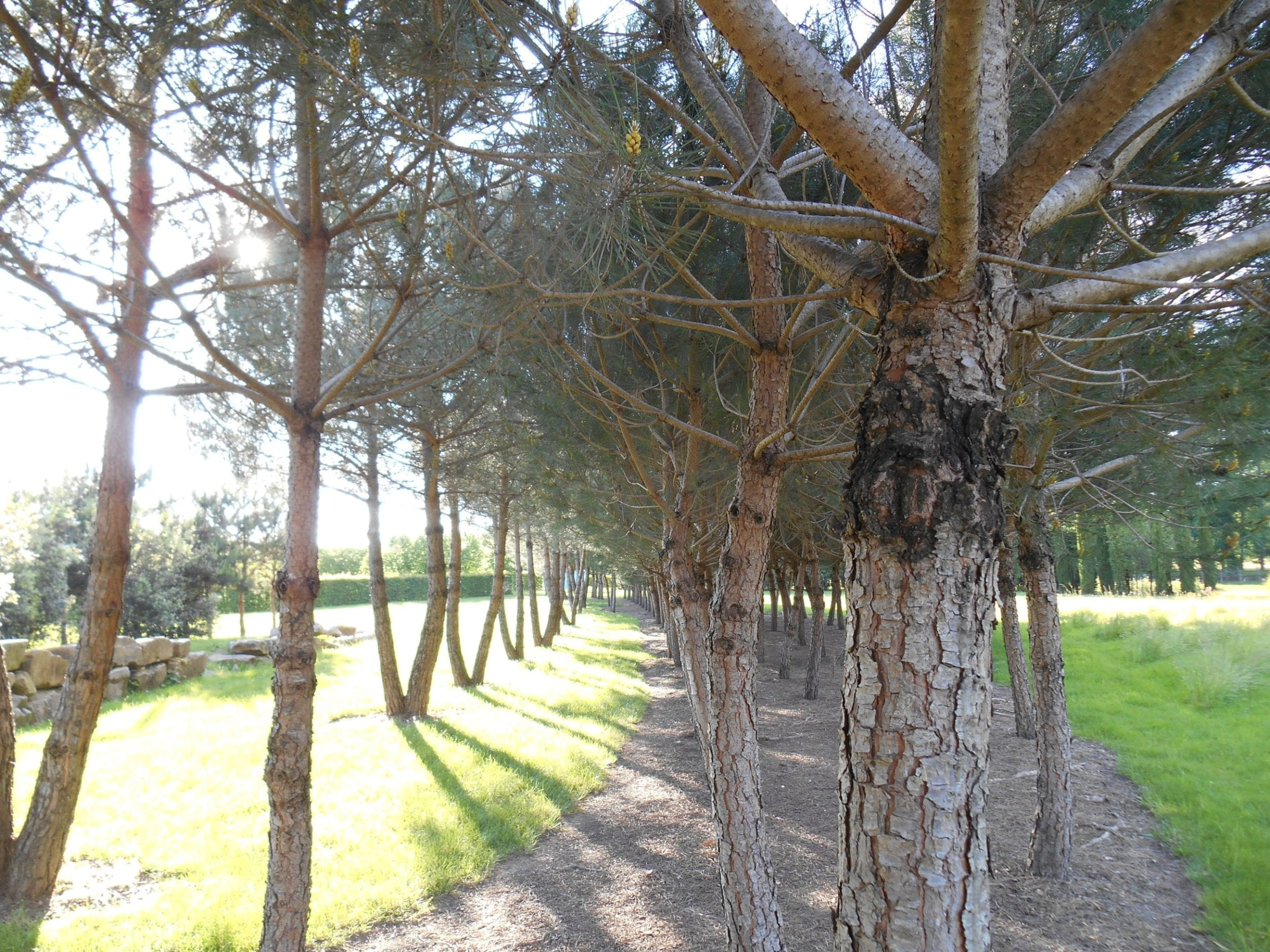 5a_Imagining_the_lime_trees_overlooking_the_Royal_Palace_Gardens_Paris