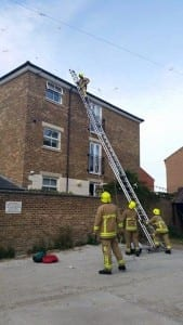 Firemen rescue gull in Seaford
