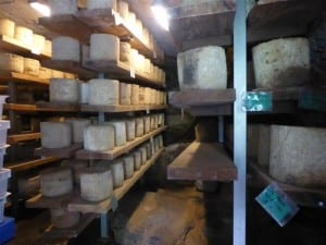 Cheeses in the ageing room