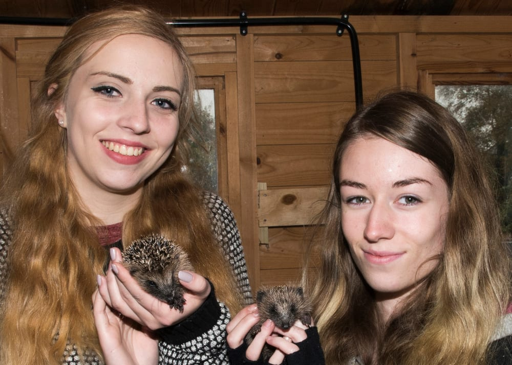 Warwickshire Wildlife Sanctuary, Kit Baillie and Lauren Steadmen with baby hedgehogs