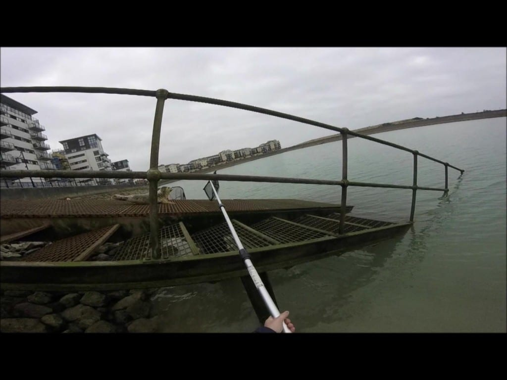 Sovereign Harbour Seal Rescue (3)