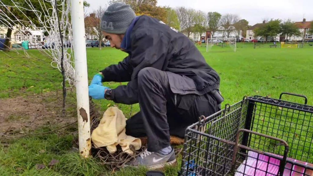 Fox entangled in Goal Netting at Roselands Eastbourne rescued by Chris Riddington (1)