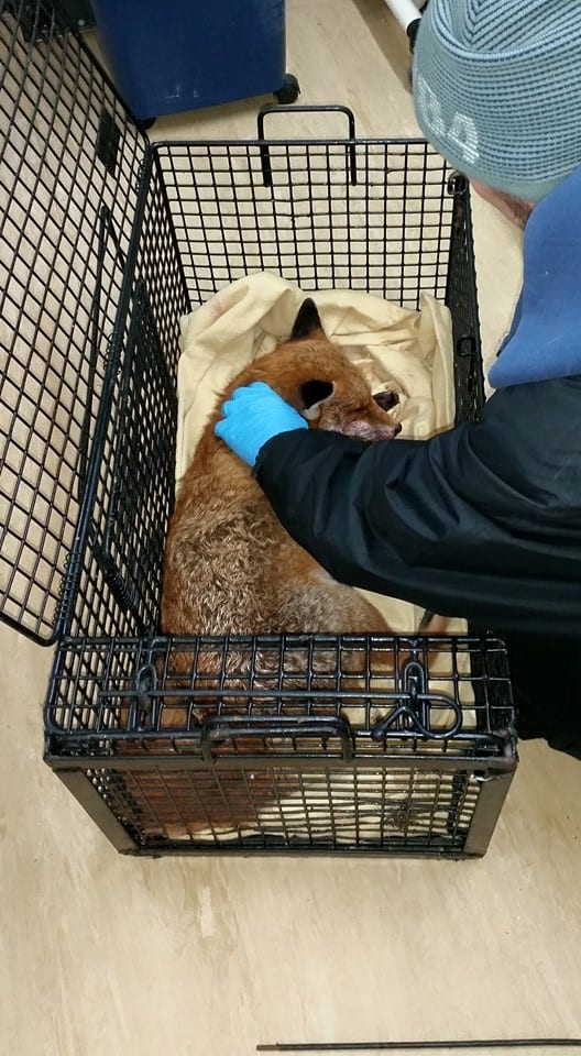 One of WRAS recent Fox road casualties