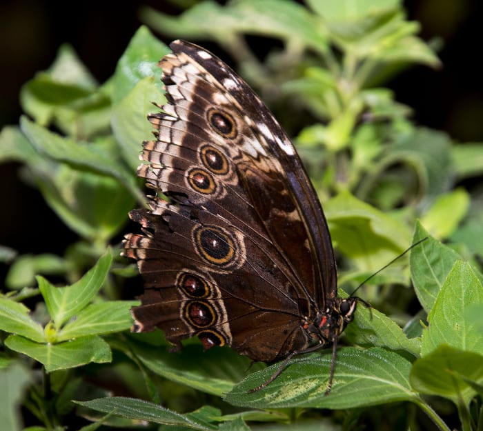 Stratford Butterfly Farm 2015 One-of-the-exotic-species