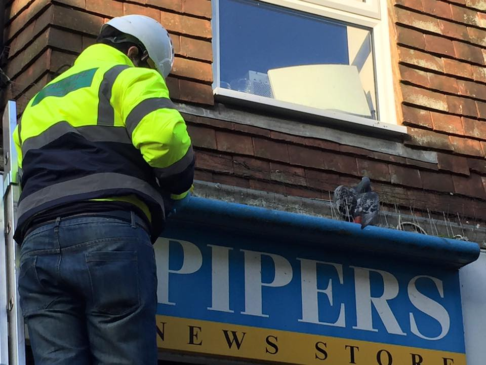 Rescuer Andrew rescuing a pigeon in Hailsham High Street