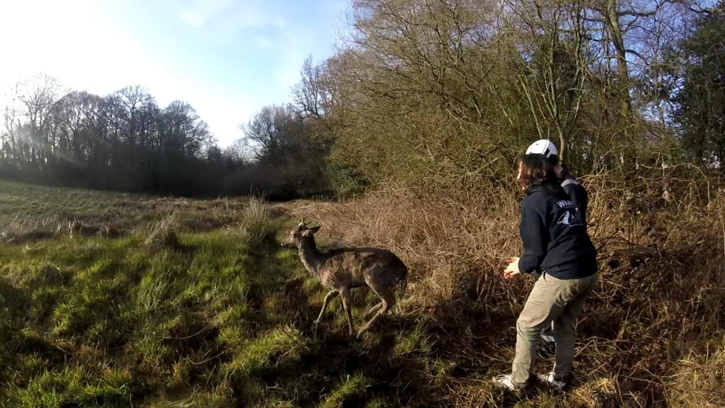 Photos by WRAS of Dallington Deer Rescue (1)