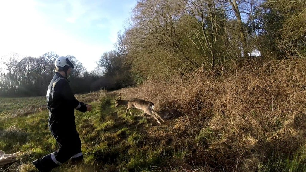 Photos by WRAS of Dallington Deer Rescue (4)