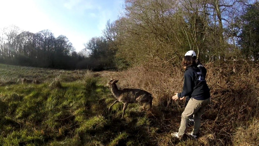 Photos by WRAS of Dallington Deer Rescue (6)