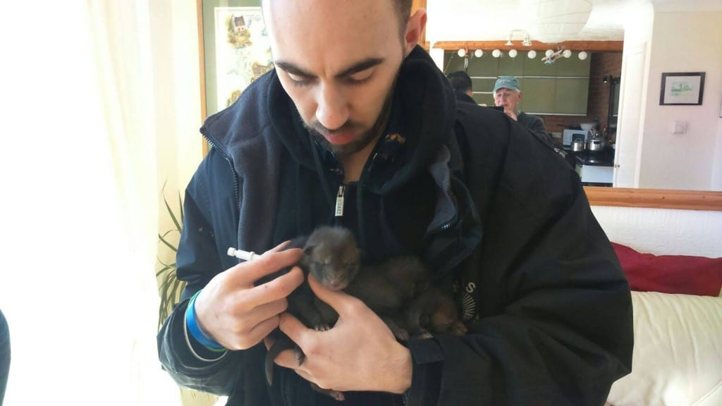 Chris with the three fox cubs from Langney