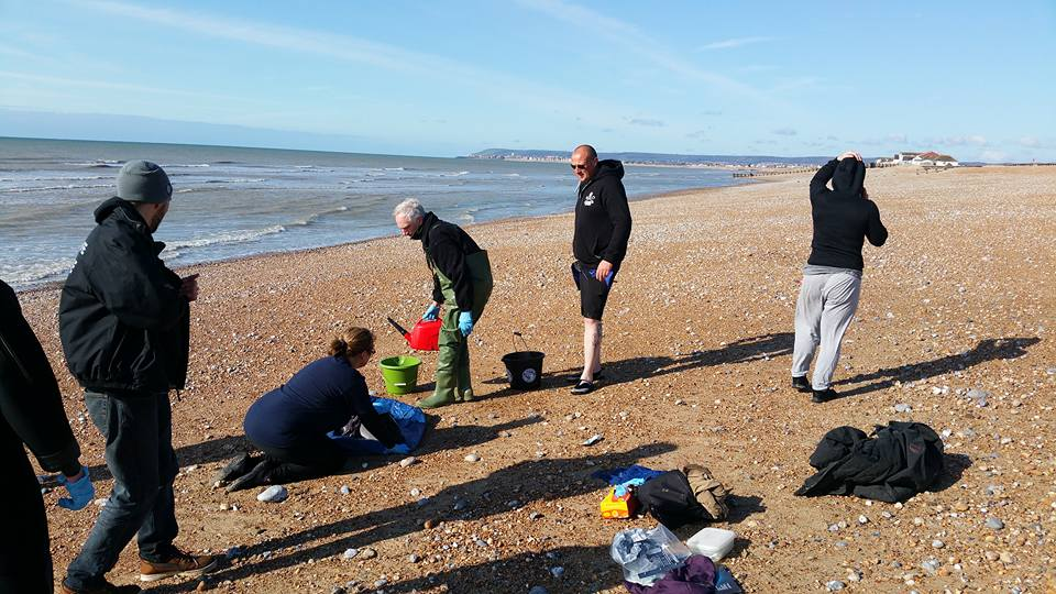 Porpoise Rescue At Normans Bay (1)