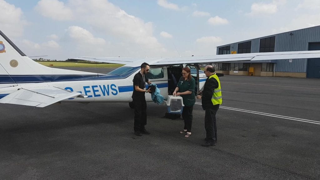 WRAS Chris Riddington handing over the Buzzard to Lucy Kells from Vale Wildlife Rescue at Gloucester Airport