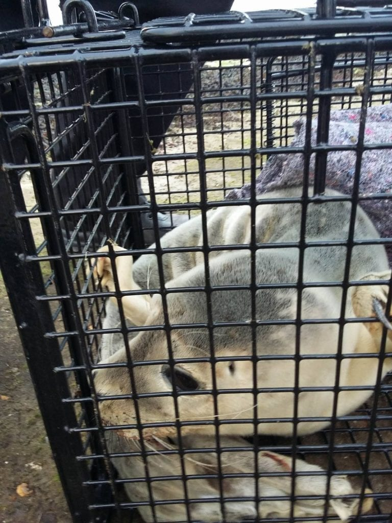 Injured Newhaven Seal (2)