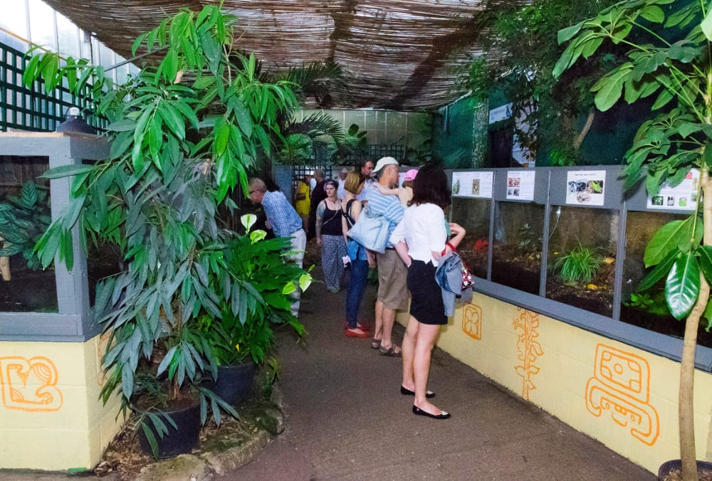 STRATFORD BUTTERFLY FARM 2016 Insect City