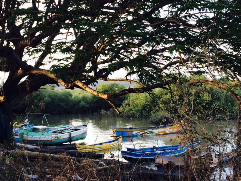 Colourful boats surrounded by mangroves