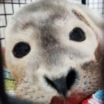 Eastbourne Seal 5th Aug 2017 4