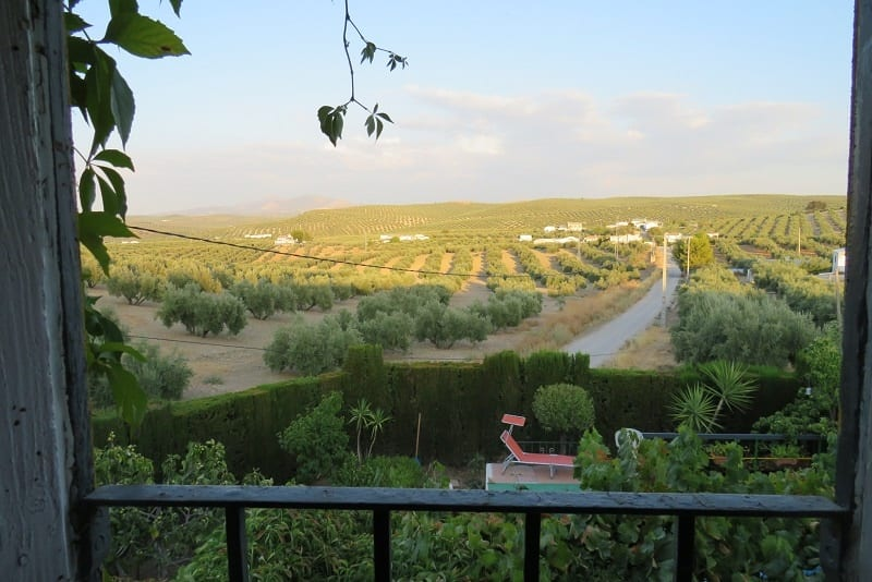 Olive View from Property for Sale