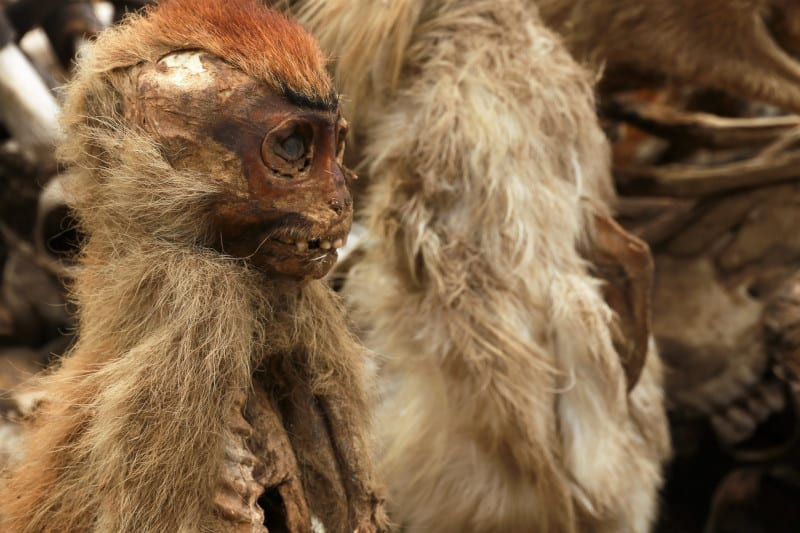 small monkey with a dried expression