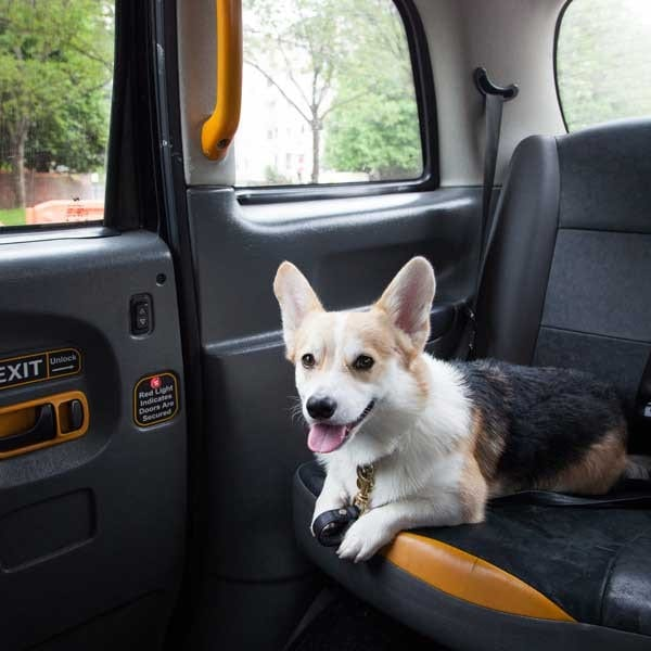 A well behaved cab customer