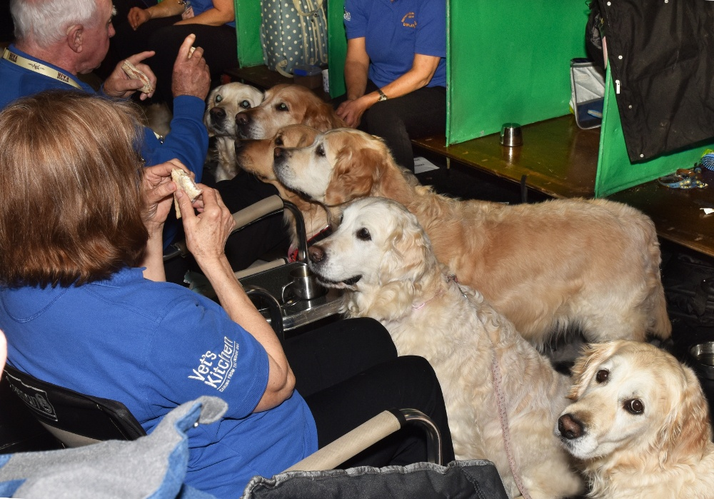 Pic Southern Golden Retriever Display Team take a break at the show