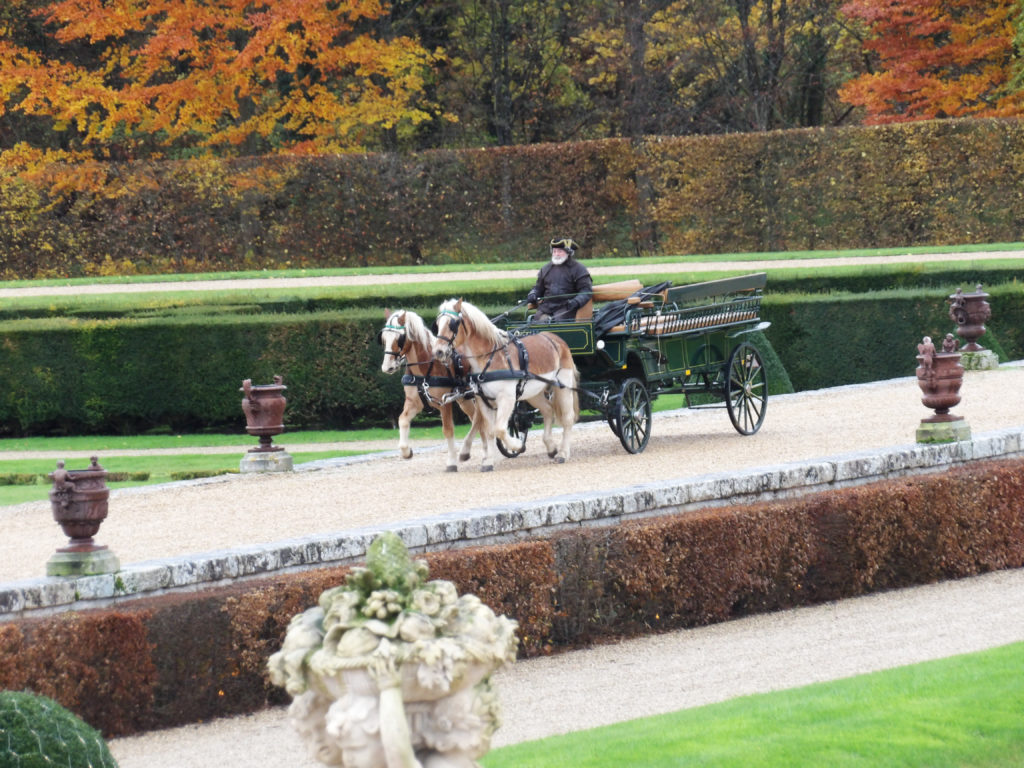 Horse drawn carriage in the gardens