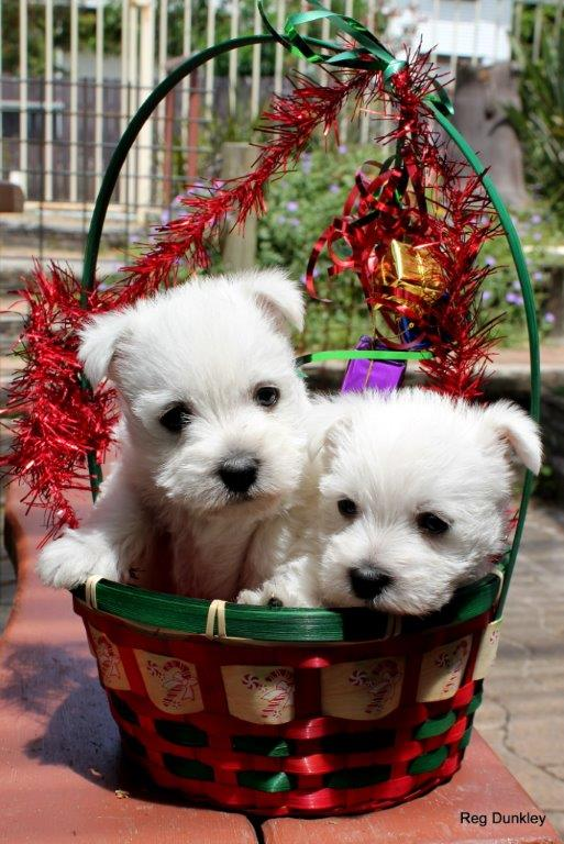Eunices puppies