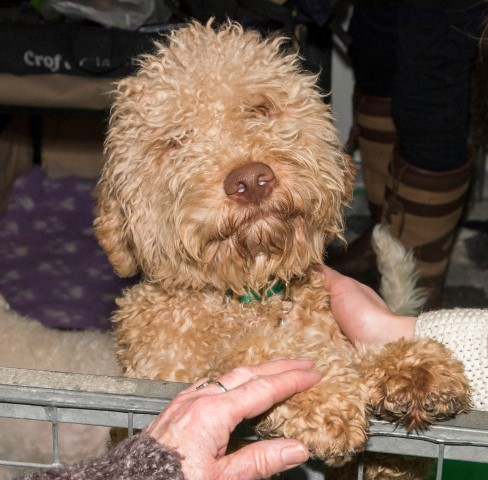 Pic Be sure to explore the Discover Dogs area at Crufts
