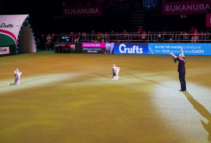Pic From the amazing Heelwork to Music oficionado Mary Ray and her final performance at Crufts