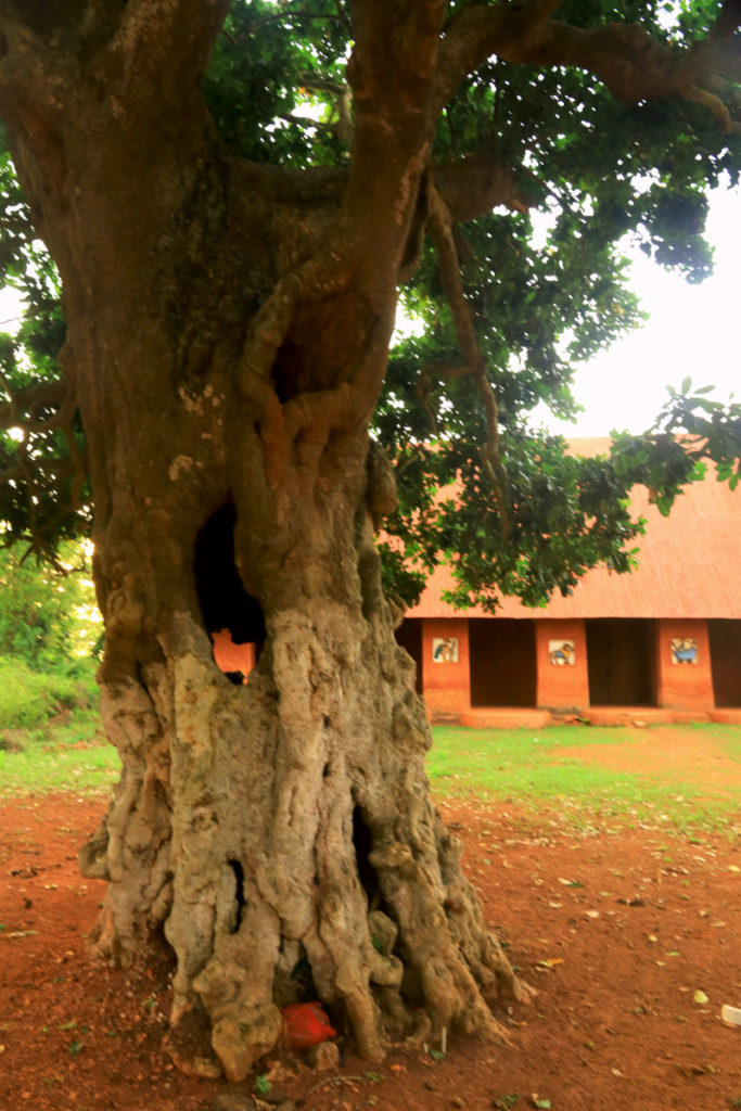 Sacred tree with the entrance to King Agaja Palace behind