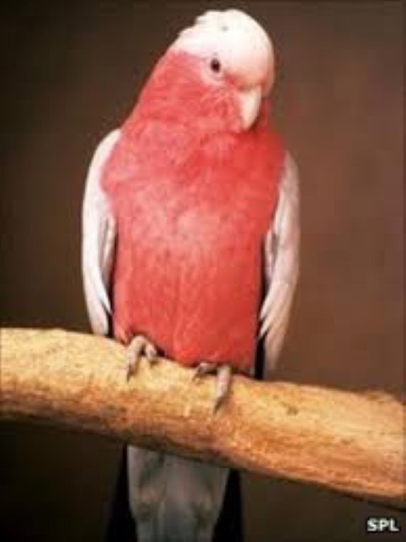 yup its a parrot