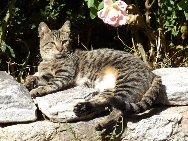 Athenians love tourists and cats