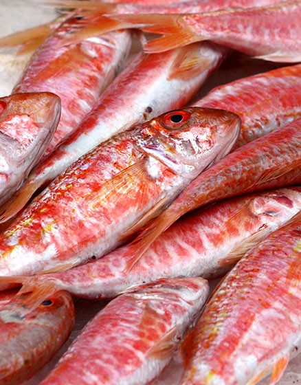 MalDia Red Mullet