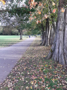 Pic Tree lined avenues and spacious playing fields