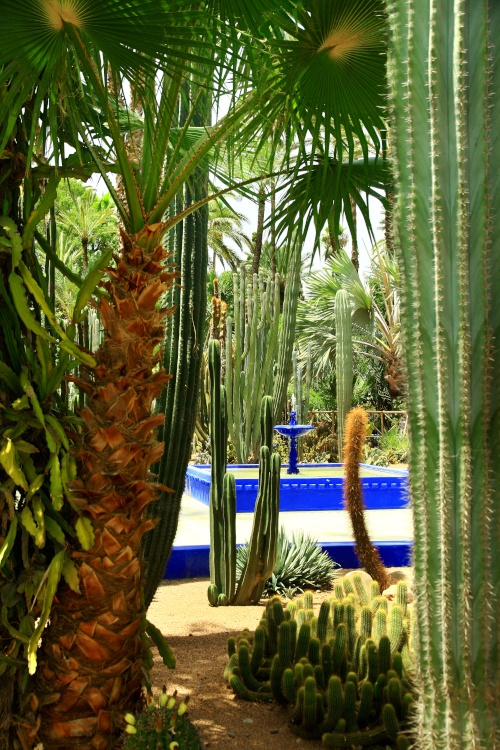 Deep blue fountain framed by ferns and cacti