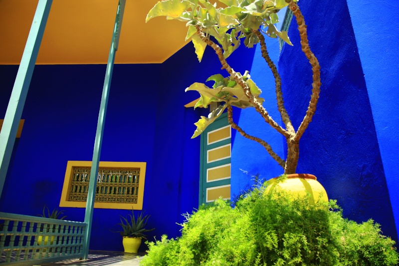 The Majorelle blue studio balanced with exotic plants