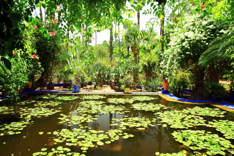 Large pool with lillies surrounded by tropical foliage