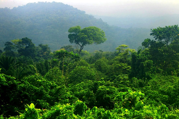 Lower slopes of Mnt Cameroon