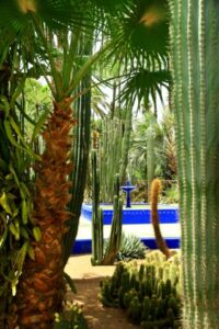3.-Deep-blue-fountain-framed-by-ferns-and-cacti.-1
