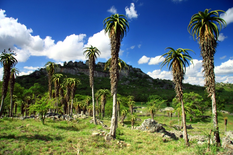 4.-Stunted-palms-close-to-the-Valley-Complex.