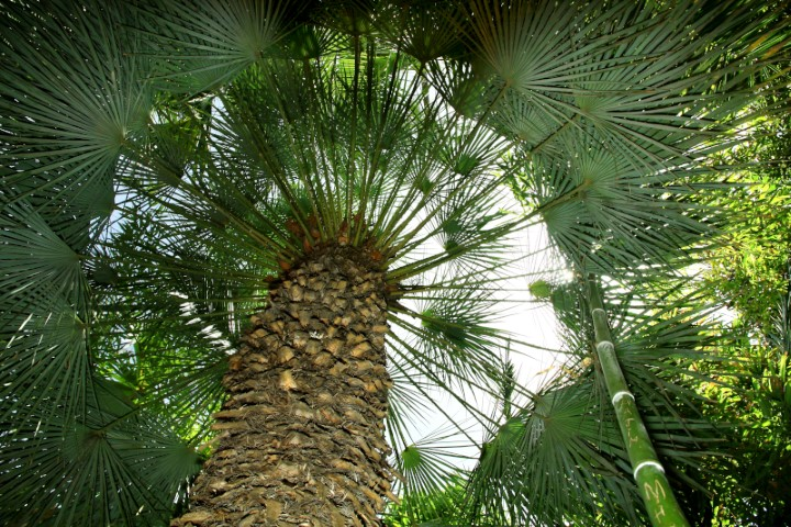 7.-Up-through-the-inner-circle-of-a-palm-tree.