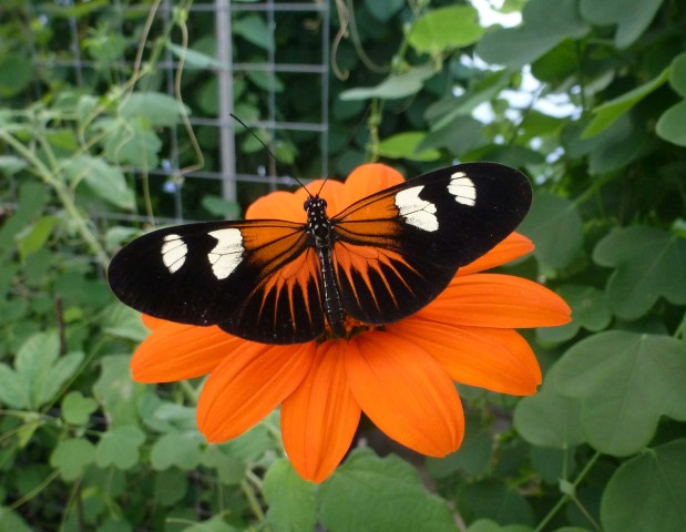 Pic-3.-Butterfly-farm-Heliconius-1