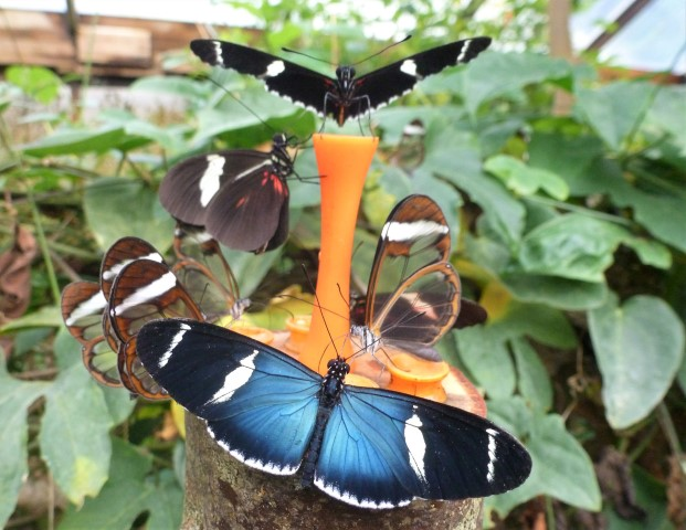 Pic-4.-Butterfly-farm-ClivesButterflies-1