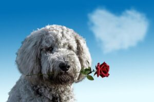 Pic-3.-Valentines-Day-.By-Ancapictures-via-Pixabay