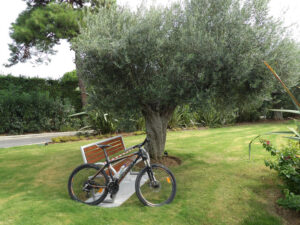 3-Ancient-olive-tree-at-Ikos-Olivia-Resort