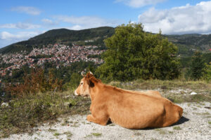 2-A-chance-encounter-in-Pindus-Mountains