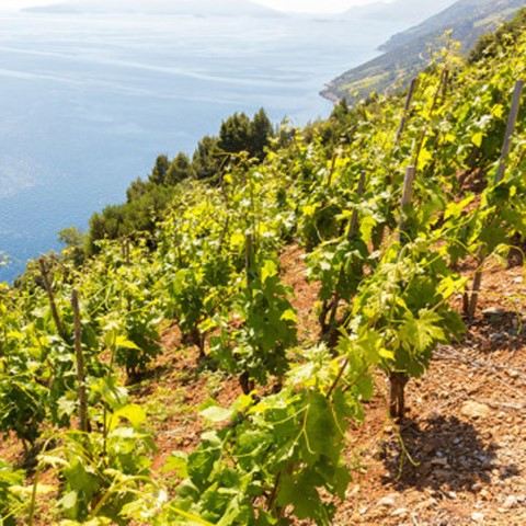 6-Croatia-is-also-a-real-wine-country