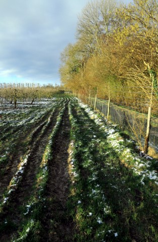 8.-Light-patches-of-snow-at-the-orchards-perimetre