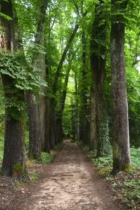 3-Go-for-a-forest-walk