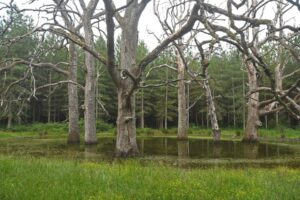 4-Impressive-oak-trees-in-their-pound-at-Loire-Valley-Lodges